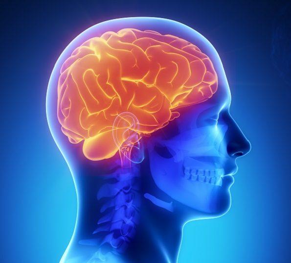 il primo lavoro su mini-cervelli prodotti a partire da cellule staminali autologhe
